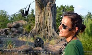 Zoom Torino - talk biologi - gibboni siamanghi
